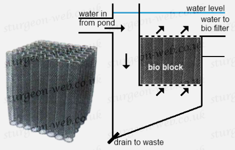 Pond filtration basics sturgeon web for Diy biological filter media